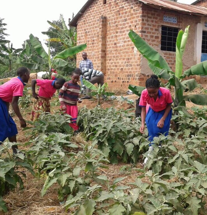 Food Security Center | Striving for sustainable agriculture in Uganda