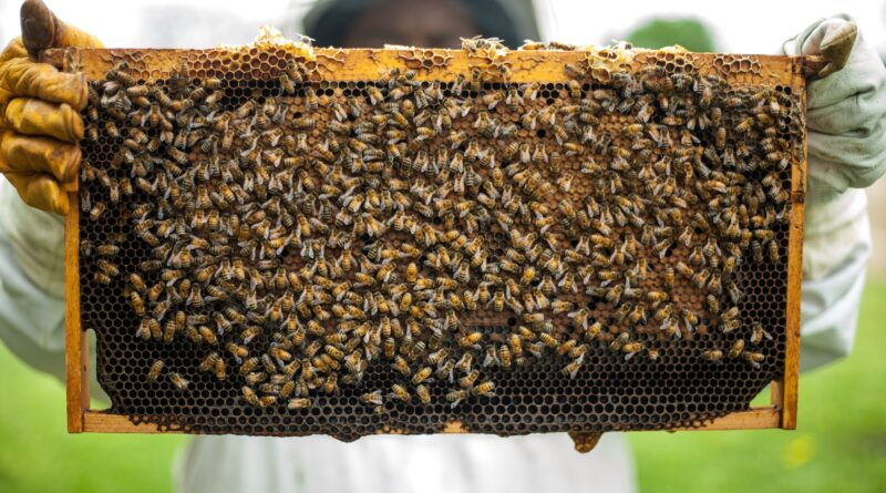 Food Security Center | The challenges of being a beekeeper