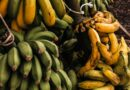 Food Security Center | Fruits do not go bad as quick as you think