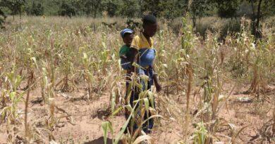 WFP: Drought is killing Zimbabwe