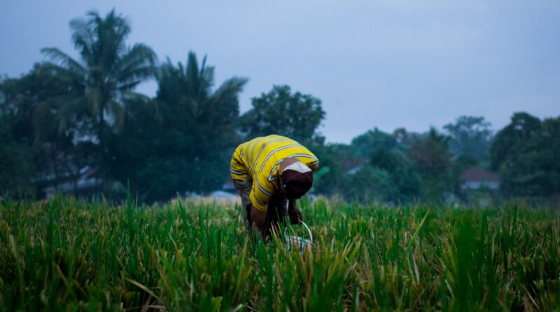 Investing in Nutrition Smart Agriculture